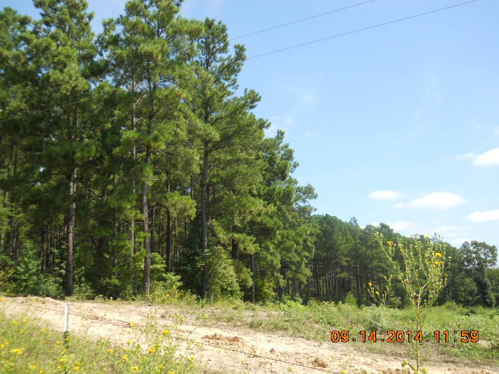 Property for sale at TBD Live Oak Road, Gilmer,  TX 75644